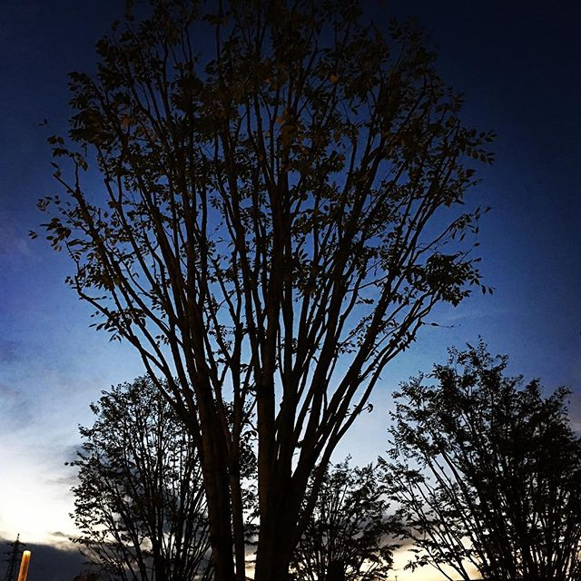 【ぐもにん2573】幸せは自分の中に。今日も「笑顔の選択」と。#goodmorning #trees #sunset #silhouette #おはよう