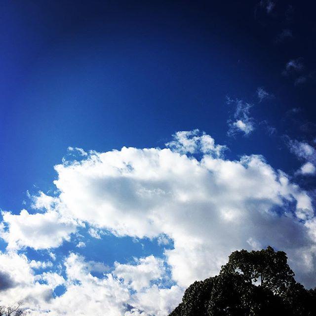 【ぐもにん2584】全ては繋がり糧となる。今日も「笑顔の選択」と。#goodmorning #bluesky #beautifulsky #blue #beautiful #sky #clouds #おはよう