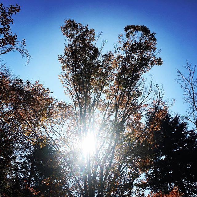 【ぐもにん2582】進化し続けている。今日も「笑顔の選択」と。#goodmorning #bluesky #beautifulsky #trees #blue #beautiful #sky #sunlight #sun #️ #おはよう