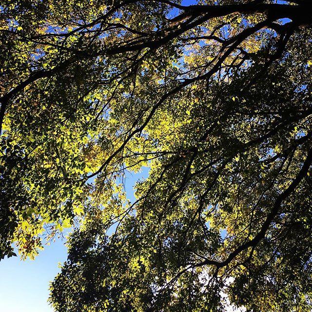 【ぐもにん2587】条件のない幸福を味わえること。今日も「笑顔の選択」と。#goodmorning #leaves #trees #beautifulsky #beautiful #sky #autumn #おはよう #今日は雨だけど