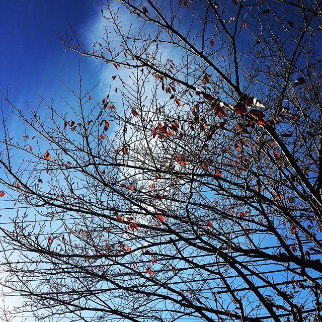 【ぐもにん2591】目の前にあること一つ一つを全力で丁寧に。今日も「笑顔の選択」と。#goodmorning #beautifulsky #bluesky #beautiful #blue #sky #branches #おはよう