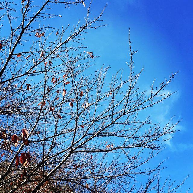 【ぐもにん2594】自分なんての言い訳を捨てる。今日も「笑顔の選択」と。#goodmorning #beautifulsky #bluesky #beautiful #blue #sky #autumnleaves #autumn #winter #branches #おはよう