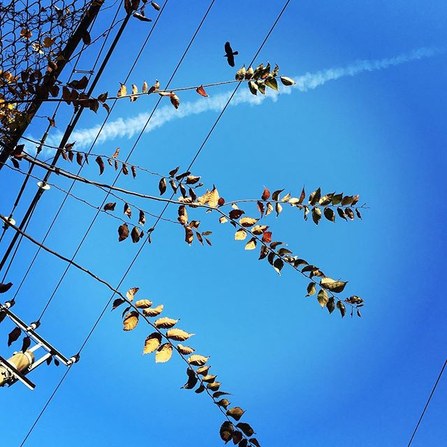 【ぐもにん2599】行き先は自分が決めている。今日も「笑顔の選択」と。#goodmorning #beautifulsky #bluesky #beautiful #blue #sky #goodvibes #おはよう