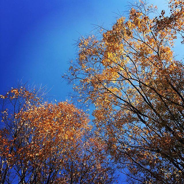 【ぐもにん2604】自分の周り全ては恵み。行く時も、とどまる時も糧になる。今日も「笑顔の選択」と。#goodmorning #bluesky #beautifulsky #blue #beautiful #sky #autumnleaves #trees #おはよう