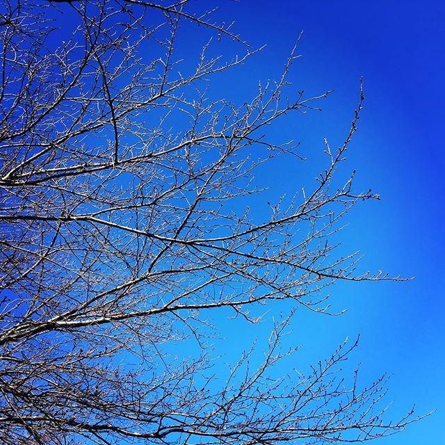 【ぐもにん2613】未来を向くと過去が変わる。今日も「笑顔の選択」と。#goodmorning #bluesky #beautifulsky #blue #beautiful #sky #winter #おはよう #冬空