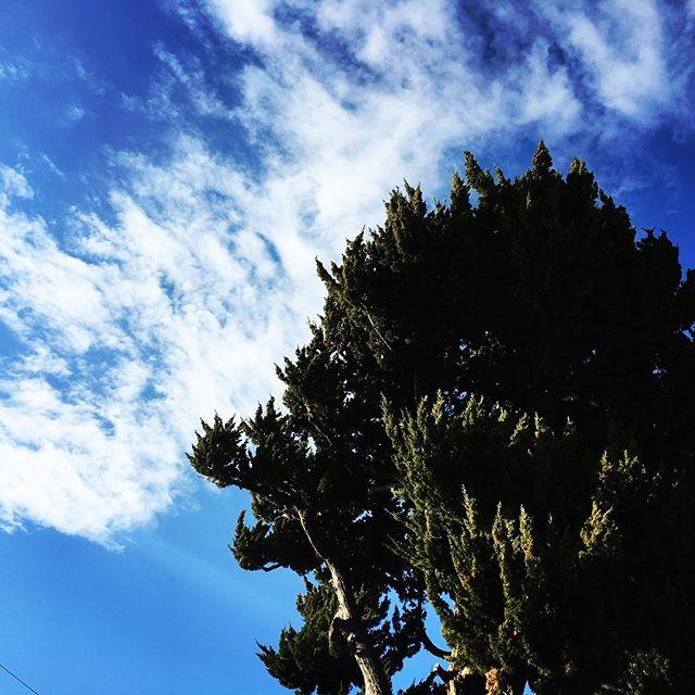 【ぐもにん2616】心と身体と思考の健全。バロメータは心地よさ。今日も「笑顔の選択」と。#goodmorning #beautifulsky #bluesky #beautiful #blue #sky #tree #photography #iphonephotography #おはよう