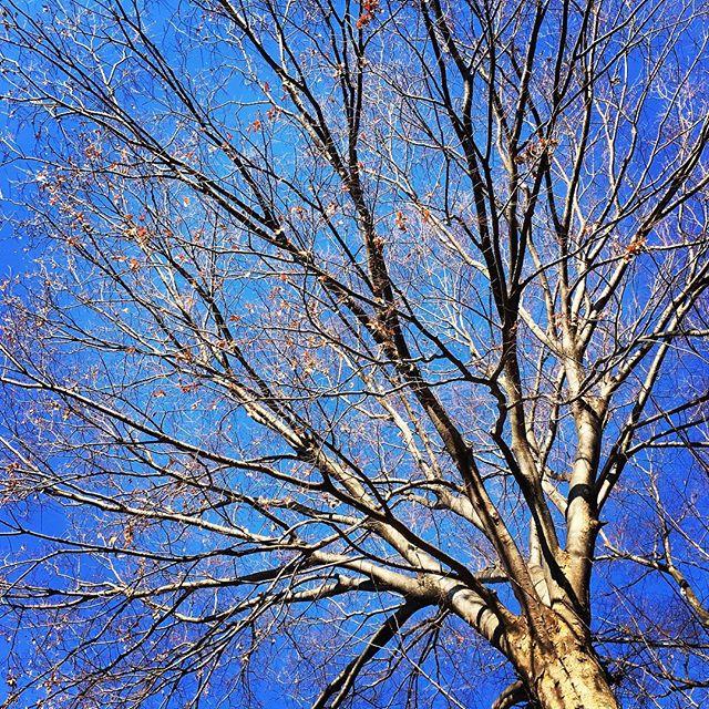 【ぐもにん2021】いつでも今。過去も未来もここに。今日も「笑顔の選択」と。#goodmorning #beautiful #bluesky #blue #sky #tree #branches #おはよう