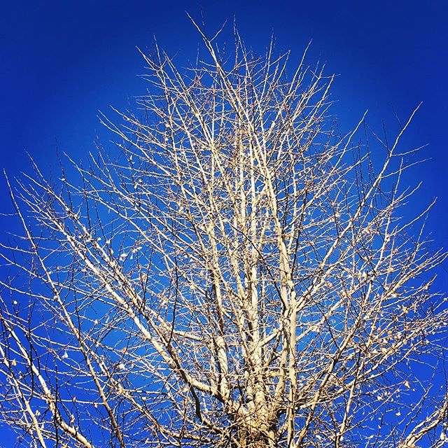 【ぐもにん2027】変わり続ける変わらなさ。今日も「笑顔の選択」と。#goodmorning #bluesky #beautifulsky #blue #beautiful #sky #trees #branches #photography #iphonephotography #おはよう