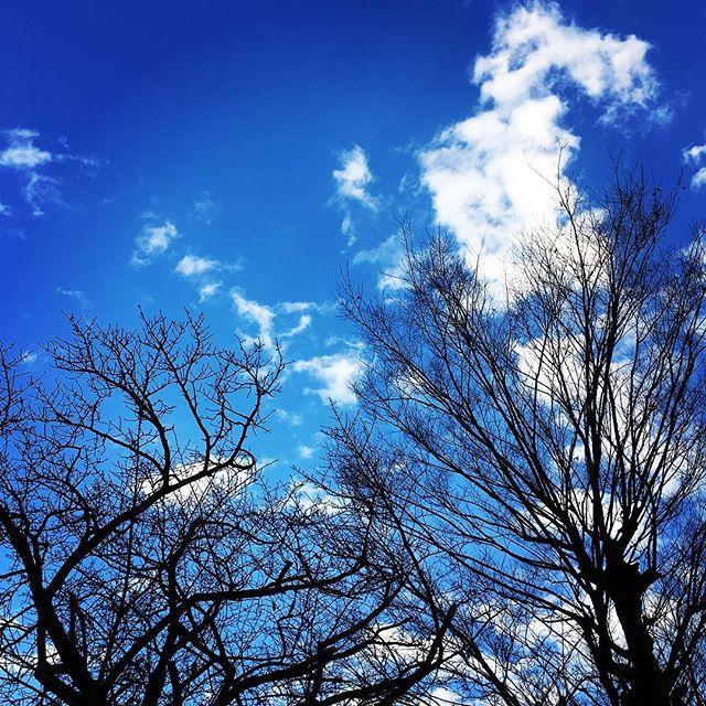 【ぐもにん2609】選んで決めて動く。今日も「笑顔の選択」と。#goodmorning #bluesky #beautifulsky #blue #beautiful #sky #trees #winter #おはよう