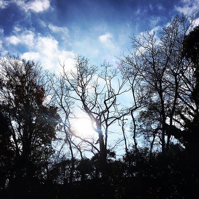 【ぐもにん2618】各々の持つ聖性を大切に。今日も「笑顔の選択」と。#goodmorning #beautifulsky #silhouette #beautiful #sky #trees #photography #iphonephoto #おはよう