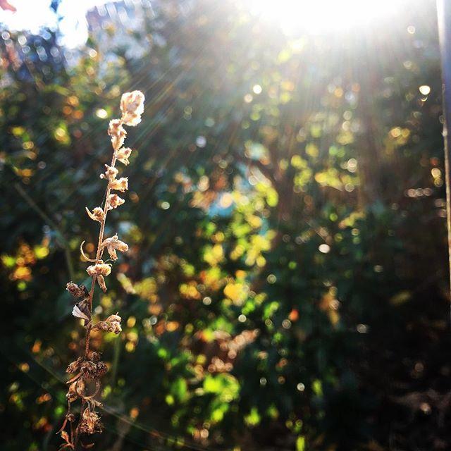 【ぐもにん2033】背筋を伸ばして前向いて呼吸を意識。今日も「笑顔の選択」と。#goodmorning #sunshine #plants #green #photography #iphonephotography #おはよう