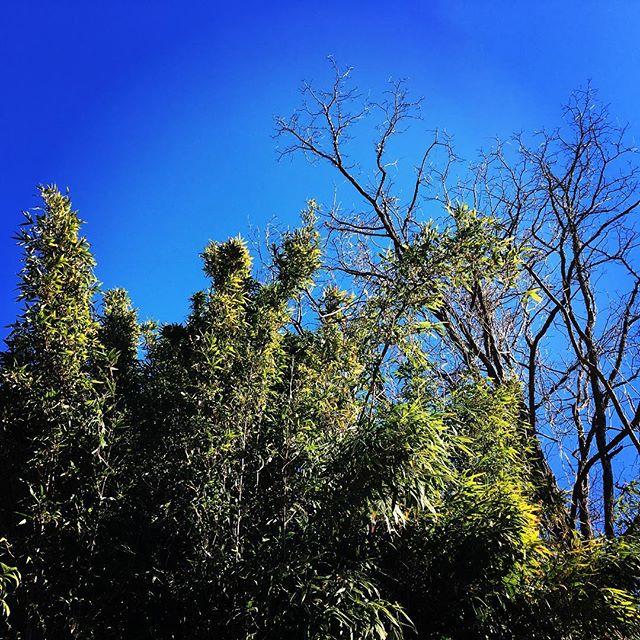 【ぐもにん2048】行動も発する言葉も自分の一部。今日も「笑顔の選択」と。#goodmorning #bluesky #green #blue #sky #photography #iphonephotography #おはよう
