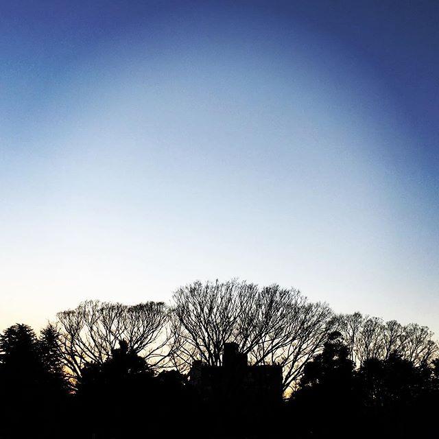 【ぐもにん2041】肉体がある今をとことん楽しみ尽くす。今日も「笑顔の選択」と。#goodmorning #beautifulsky #beautiful #sky #sunset #twilight #silhouette #trees #photography #iphonephotography #おはよう
