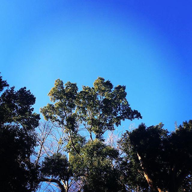 【ぐもにん2051】行くも止まるも最適なタイミングに導かれている。安心して委ね楽しむ。今日も「笑顔の選択」と。#goodmorning #bluesky #beautifulsky #blue #beautiful #sky #trees #photography #iphonephotography #おはよう