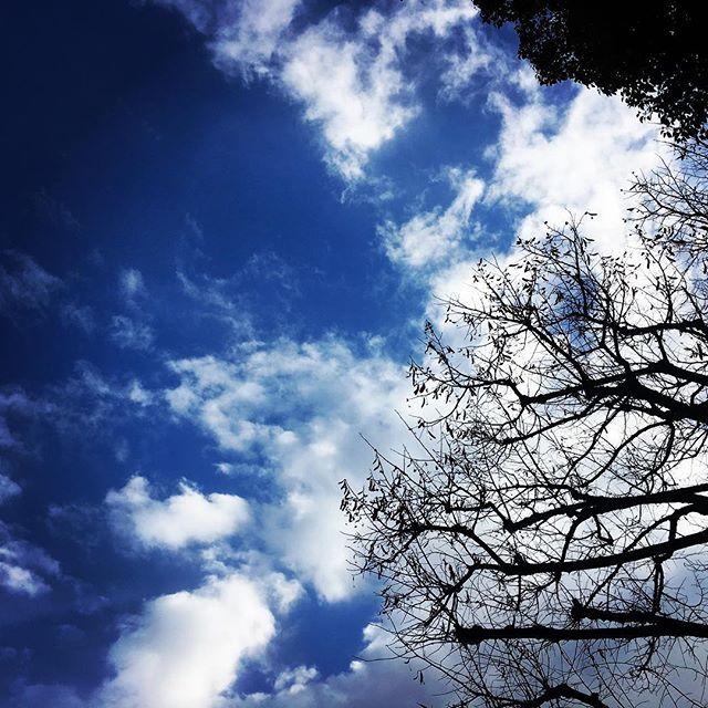 【ぐもにん2057】健やかな心と思考と身体の循環。今日も「笑顔の選択」と。#goodmorning #bluesky #beautifulsky #blue #beautiful #sky #branches #photography #iphonephotography #photo #おはよう