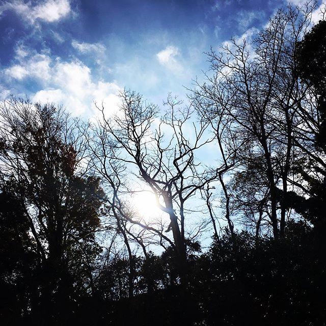 【ぐもにん2661】世界は自分が創っている。今日も「笑顔の選択」と。#goodmorning #bluesky #beautifulsky #blue #beautiful #sky #trees #silhouette #photography #photo #iphonephotography #おはよう #ナンバリングが12月からミスってた #修正