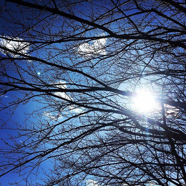 【ぐもにん2673】見たいものを見ていると知ることから、見えないものが見えてくる。#goodmorning #bluesky #beautifulsky #blue #beautiful #sky #branches #sunshine #おはよう