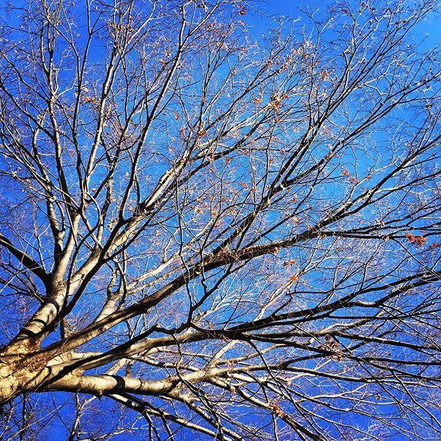 【ぐもにん2680】気持ちや思考も連鎖する。優しさフィルターで世の中を見る。今日も「笑顔の選択」と。#goodmorning #bluesky #blue #sky #branches #beautiful #photography #photo #iphonephotography #おはよう