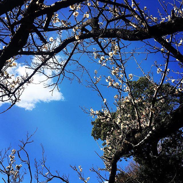 【ぐもにん2687】感じて動く。今日も「笑顔の選択」と。#goodmorning #bluesky #beautifulsky #blue #beautiful #sky #plumblossom #photography #photo #iphonephotography #おはよう