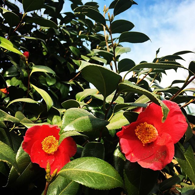 【ぐもにん2700】毎日自分で決めている。今日も「笑顔の選択」と。#goodmorning #beautifulflowers #beautiful #flowers #sky #green #red #photography #photo #iphonephotography #おはよう