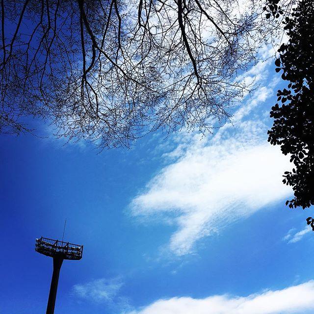【ぐもにん2703】見ること知ること考えること感じること。全部つながっている自分の力。今日も「笑顔の選択」と。#goodmorning #bluesky #beautifulsky #blue #beautiful #sky #branches #photography #photo #iphonephotography #おはよう