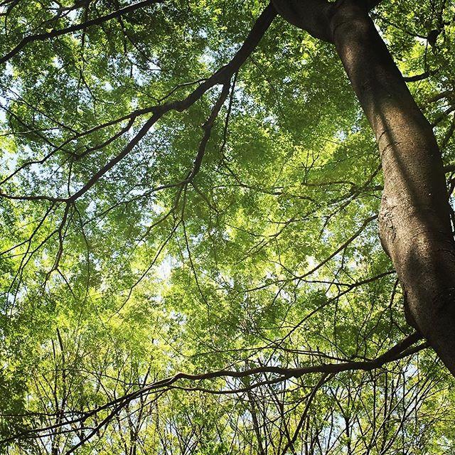 【ぐもにん2721】時々背伸びしてストレッチ。生き方も同じように。今日も「笑顔の選択」と。#goodmorning #beautiful #trees #green #branches #photography #photo #iphonephotography #おはよう